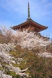 Kiyomizu寺庙和樱花在京都 图库摄影