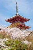 Kiyomizu寺庙和樱花 库存照片