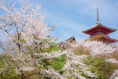 Kiyomizu寺庙和樱花 免版税库存图片