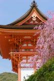 Kiyomizu świątynia i czereśniowy okwitnięcie Obraz Stock