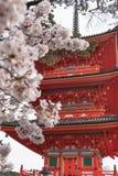 Kiyomizu-dera Tempel und Kirschblüte würzen Kirschblüte auf sprin Stockfotografie