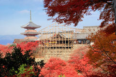 Kiyomizu-dera temple with red maple leaves under renovation period. Kyoto stock images