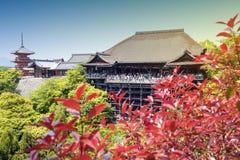 Kiyomizu-deratempel, berühmter buddhistischer Tempel in Kyoto, Japan, mit rotem Laub im Vordergrund stockbild