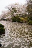 Kiyomizu relikskrin i Kyoto, Japan Royaltyfria Foton
