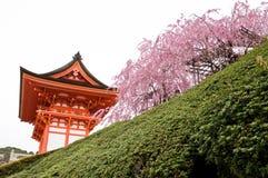 Kiyomizu relikskrin i Kyoto, Japan fotografering för bildbyråer