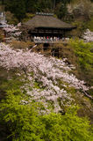 Kiyomizu Schrein in Kyoto, Japan Stockfotos