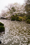 Kiyomizu Shrine in Kyoto, Japan. Pond filled with flowers at Kiyomizu Shrine in Kyoto, Japan during springtime cherry blossom Sakura season Royalty Free Stock Photos