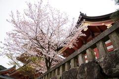Kiyomizu Shrine in Kyoto, Japan. During springtime cherry blossom Sakura season stock photo