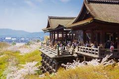 Kiyomizu tempel och körsbärsröd blomning Royaltyfri Foto
