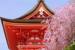 Kiyomizu tempel och körsbärsröd blomning Fotografering för Bildbyråer