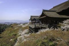 Kiyomizu-Tempel und Kirschblüte in Kyoto Lizenzfreie Stockfotos