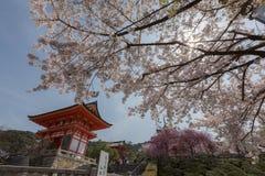 Kiyomizu-Tempel und Kirschblüte in Kyoto Stockbild
