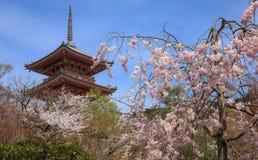 Kiyomizu-Tempel und Kirschblüte in Kyoto Stockfoto