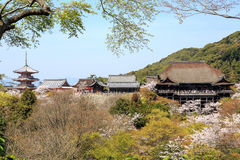 Kiyomizu temple and cherry blossom in Kyoto Stock Images