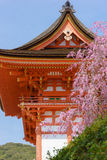 Kiyomizu temple and cherry blossom in Kyoto Stock Image