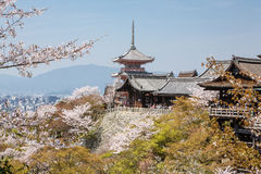 Kiyomizu temple and cherry blossom in Kyoto Royalty Free Stock Images