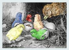 Kläcka av de lilla fågelungarna Arkivfoto