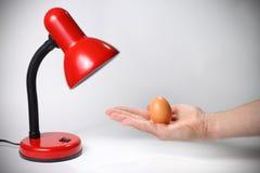 kläcka för ägg Royaltyfri Fotografi