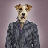 Klädd prästrussel terrier, texturerad bakgrund Royaltyfri Fotografi