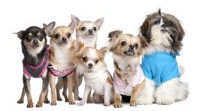 klädde hundar grupperar upp Arkivbilder