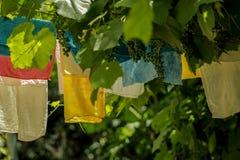 Kläder som hänger på linjer i trädgård Royaltyfri Bild