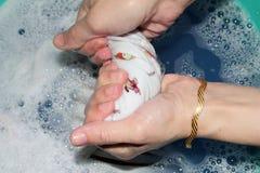 Klädertvätt och åtstramning manuellt royaltyfri fotografi