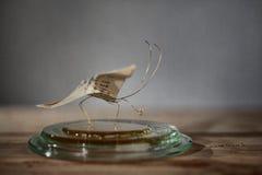 klämmt fast papper för affärsfjärilskort Arkivfoton