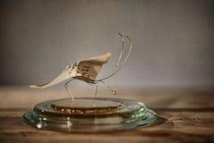 klämmt fast papper för affärsfjärilskort Arkivfoto