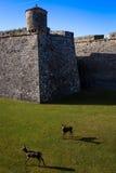 Klänning för fästning fotografering för bildbyråer