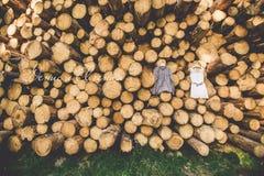 Klänningen för brud` s hänger på träd arkivbild