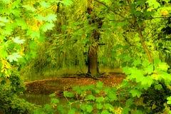 Klärung in den Wald Lizenzfreies Stockfoto