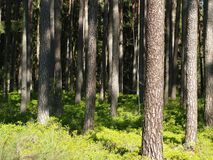Klärung in den Wald Stockbild