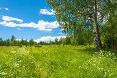 Klärung in den Wald, vor dem Abstieg zum heiligen Pokrovsky Lizenzfreie Stockbilder