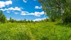 Klärung in den Wald, vor dem Abstieg zum heiligen Pokrovsky Stockfoto