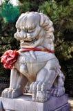 Klätt lejon Arkivfoto
