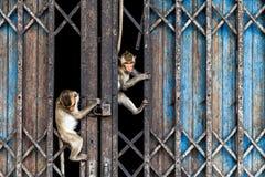 Klättra för apor royaltyfria foton