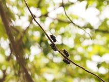 Klättra flugan Fotografering för Bildbyråer