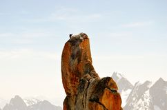 Klättra i Mont Blanc Royaltyfri Fotografi