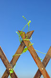klättra växten på bakgrund för blå sky Royaltyfri Foto