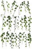 Klättra växtsamlingen Royaltyfri Fotografi