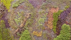 Klättra växtskärm Royaltyfria Bilder