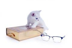 Klättrade brittisk shorthair för den klyftiga vita kattungen på en bok isolate Arkivfoton
