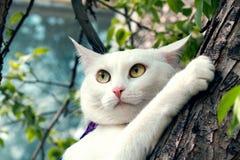 Klättrar den vita fluffiga katten för älsklingen trädet på våren Arkivfoto