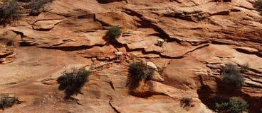 Klättring för Rocky Mountain får (Oviscanadensis) Royaltyfri Foto