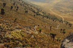 Klättring Mount Kenya arkivfoto
