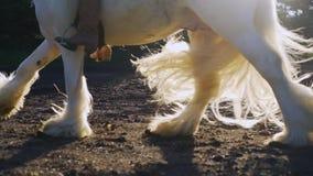 Klövarna av en häst som galopperar på jordningen arkivfilmer