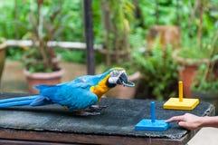 Kl-fågeln parkerar Royaltyfria Bilder