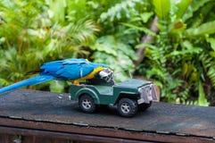 Kl-fågeln parkerar Fotografering för Bildbyråer