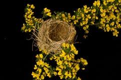 Klaar leeg nest Stock Foto's