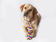 Klaar om naar Vrolijk Pride Day te gaan Royalty-vrije Stock Afbeelding